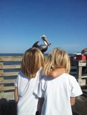 pelicanandboys